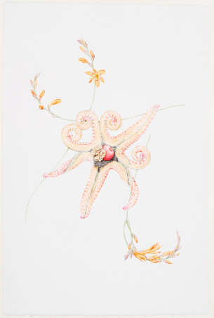 © LARS HINRICHS, UNTITLED (STARFISH), 2011, AQUARELLE, 56 X 38 CM